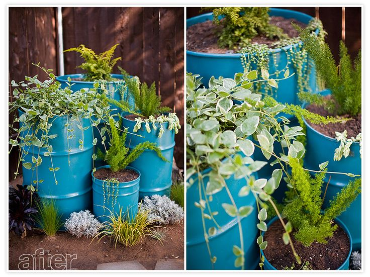 UPCYCLED OIL DRUM PLANTERSRecycle Oil, Painting Barrels, Drums Planters, Drums Ideas, Seedlings Can, Steel Drums, Recycle Drums, Upcycling Oil, Oil Drums