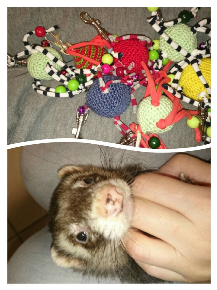 Best Rescue Ferret Ideas On Pinterest Post Animal Animal - Rescued kitten adopted by ferrets now thinks shes a ferret too