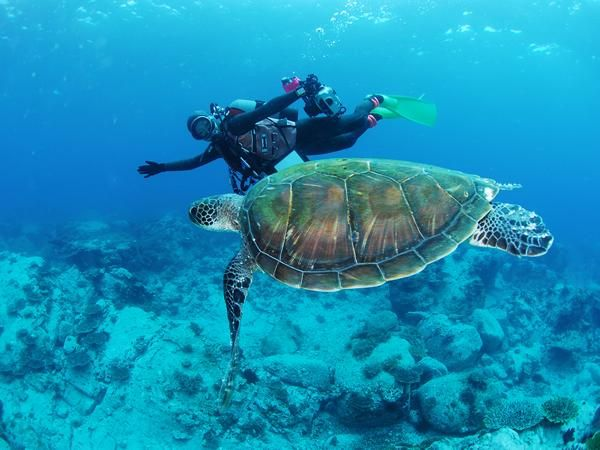 ウミガメと泳ぐ/高知・柏島ダイビングサービスSEAZOO|あそびゅー!スキューバダイビング