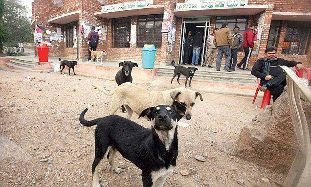 Jawaharlal Nehru University forbids feeding strays | Daily Mail Online