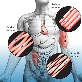 Muscle Spasms: Read About Treatment and Symptoms