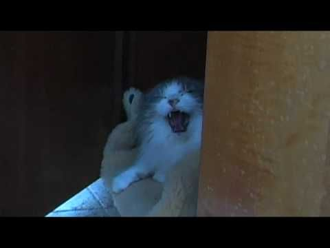 Very very angry cat attacks! So funny. Careful if you play this around a cat.