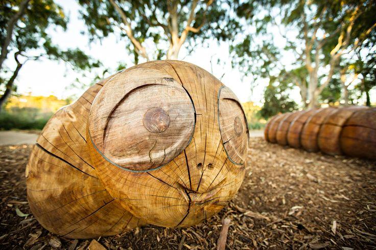 Kupe (wood grub) Bonython Park