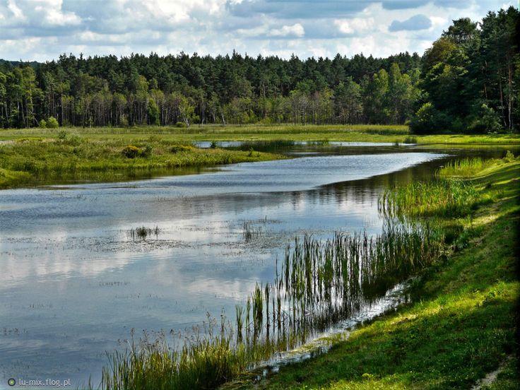 Roztoczański Park Narodowy - Zwierzyniec, Roztocze, Polska (Poland)