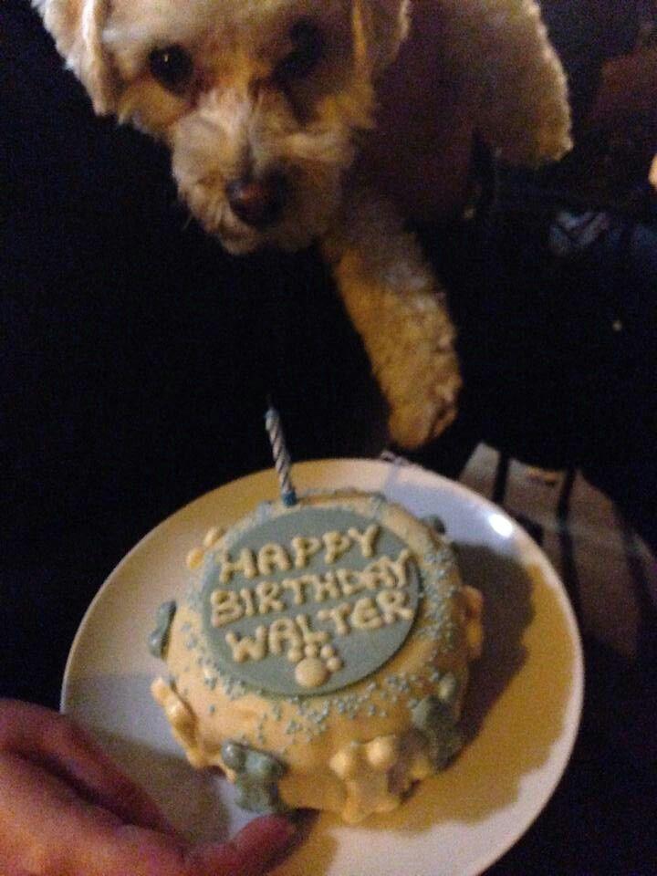 Birthday pup ♡♡