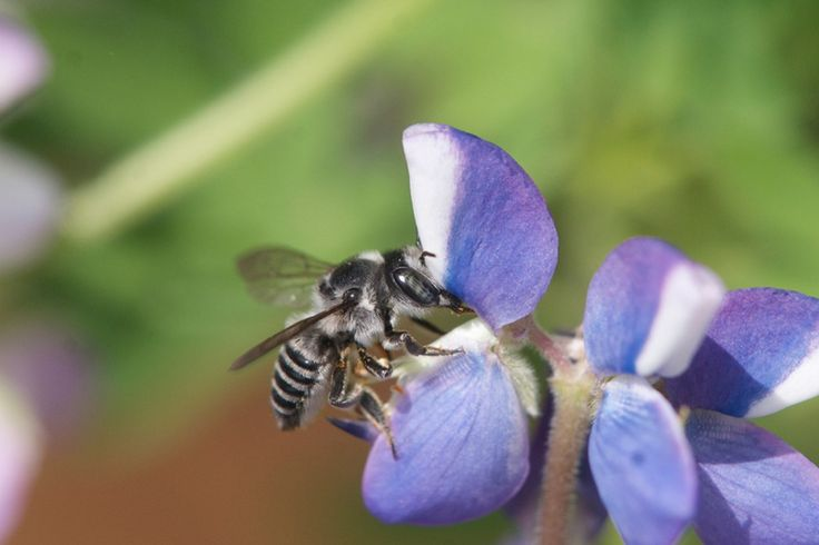 Neonicotinoids: How your bee-friendly garden may actually be killing bees, unless you know what to ask...