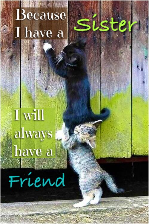 Because I have a Sister, I will always have a Friend!