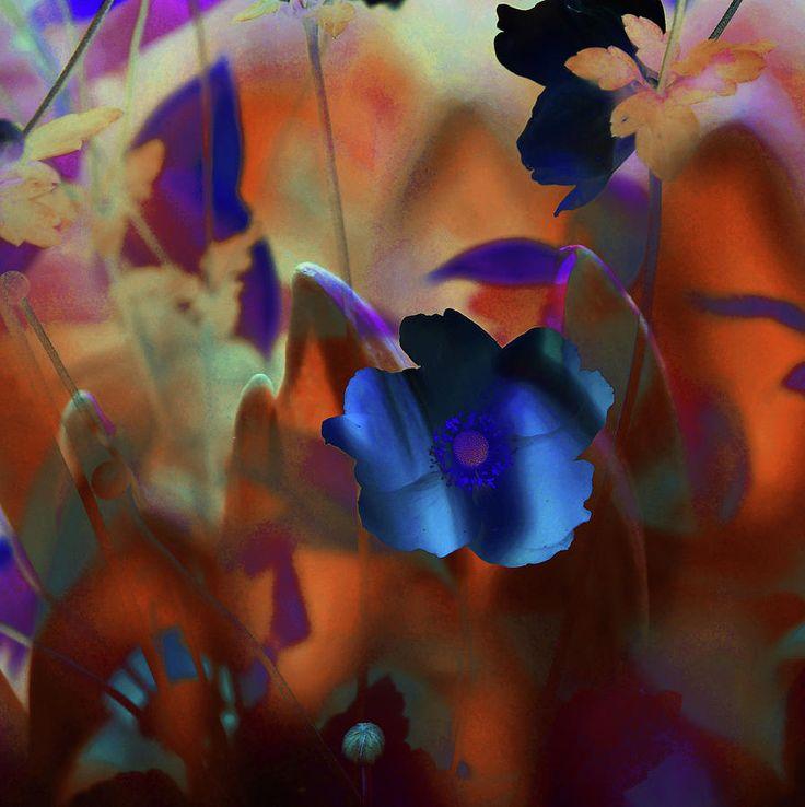 Mars Flowers by Jenny Rainbow