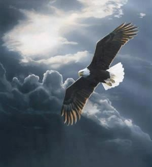 Eagles soar above the storm.  Rise up and soar do not walk on the ground with the chickens and buzzards.