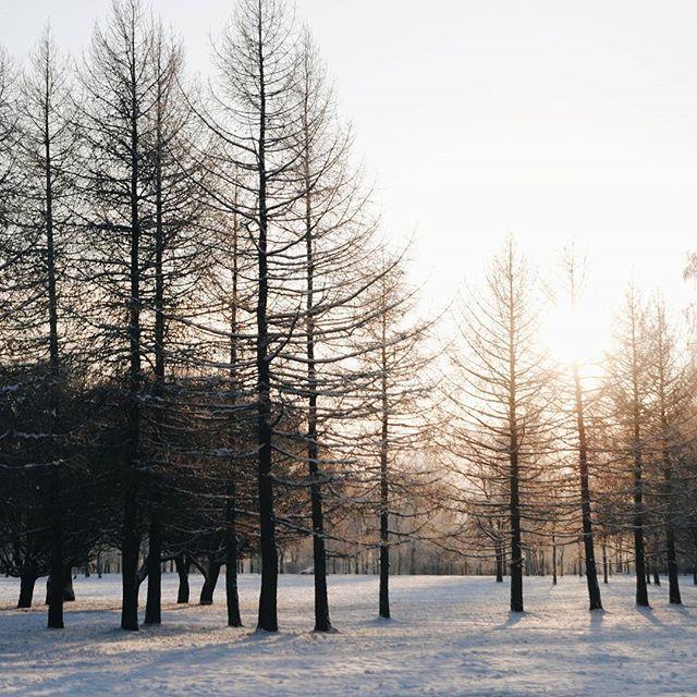 Как долго радует нас сказочная погода!:) ❄Fabulous weather! #vscocam #vsco #vscorussia #landscape #forest #wood #winter #snow #mistery #fairytale #liveadventure #sun #liveautentic #livefolk #adventure #travel #nature #January #wild