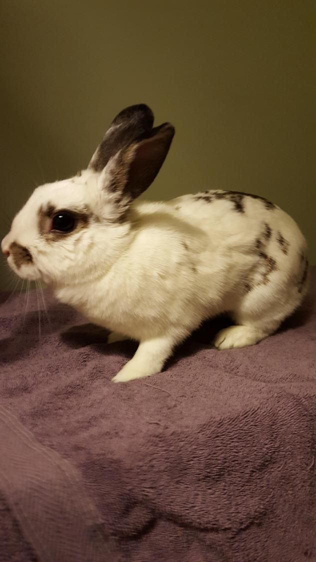 Bugsy's Animal Network- Animals Available for Adoption, All Local Rochester NY Shelters