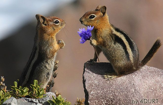 I brought you some flowers.: Cute Animal, In Love, I Love You, So Cute, Foxes Squirrels, Married Me, Baby Animal, The Beast, Purple Flower