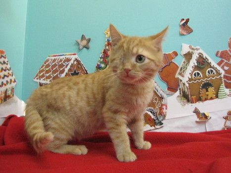 Ben is an adorable one-eyed pirate kitten who just wants his forever home in time for the holidays. Come meet him at our Westside Adoption Center today! (Hours today: 10am-4pm)