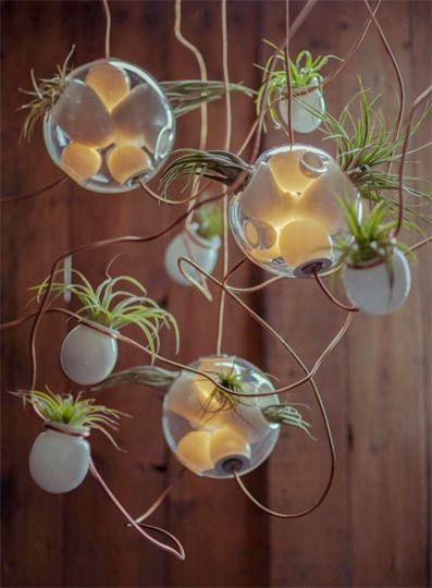 Mini air plant (epiphyte) chandelier: Omer Arbel, Pendants Lamps, Bocci 38, Air Plants, Design Firm, Glasses Art, 38 Series, Planters, Canadian Design