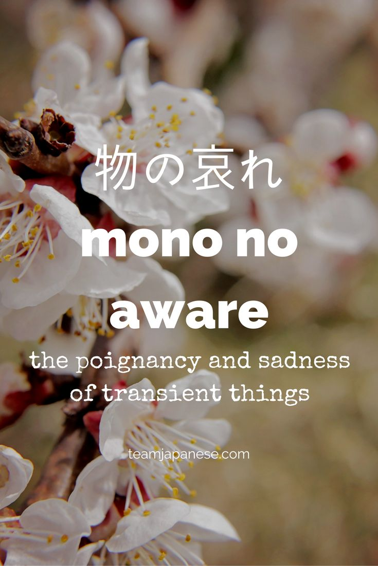 Mono no aware: the Japanese word for the sadness of transient things. For more beautiful and untranslatable Japanese words, visit teamjapanese.com
