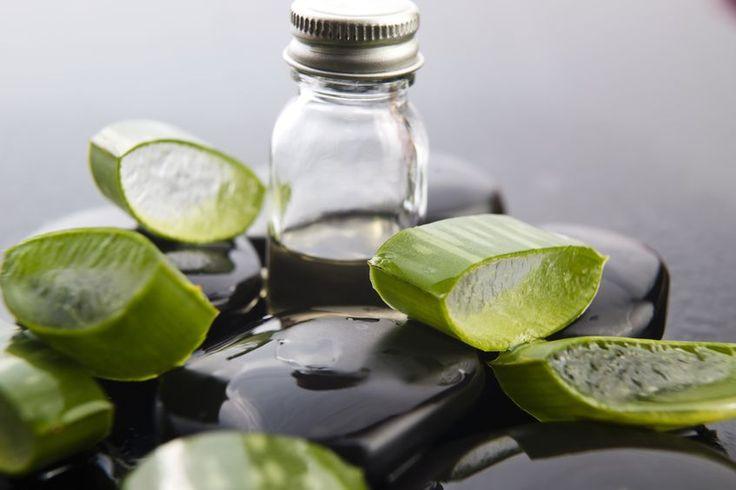 Hacer el gel de aloe vera no podría ser más fácil si tienes una planta madura en tu casa y decides poner en práctica esta sencilla receta para aprovechar todos sus beneficios