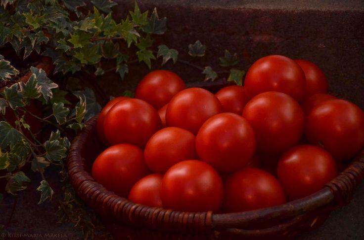 Säilytä tomaatit oikein! Unohda jääkaappi. Paras lämpötila on n. 15 astetta. www.murajantila.blogspot.com