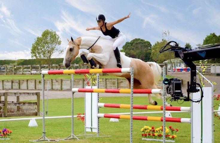 753 Best Horse Humor Images On Pinterest Horse Humor