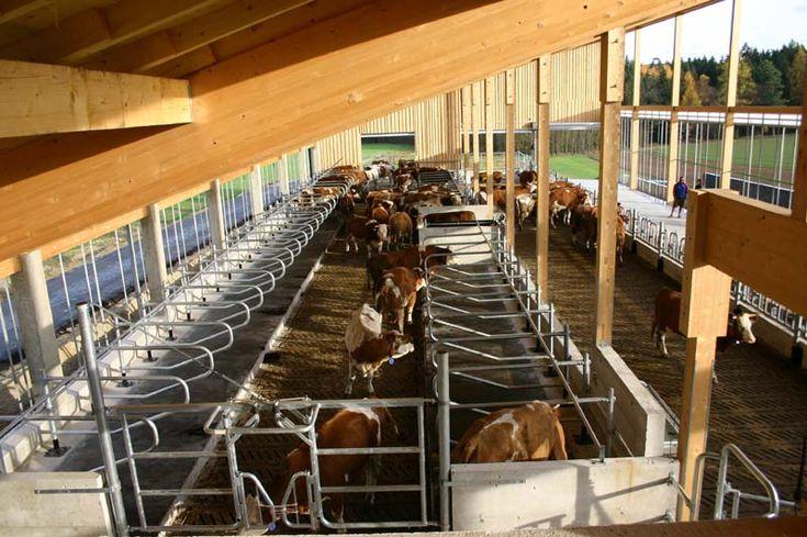 Rinderstall, Rinderhaltung, Milchvieh, Mastbullen, Kälber, Fresserstall - Weihmüller Stalltechnik