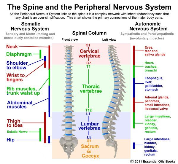 an analysis of the essentials of back pain Unlike most editing & proofreading services, we edit for everything: grammar, spelling, punctuation, idea flow, sentence structure, & more get started now.