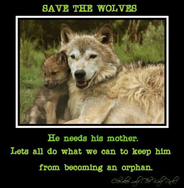 rings and needles Save the Wolves