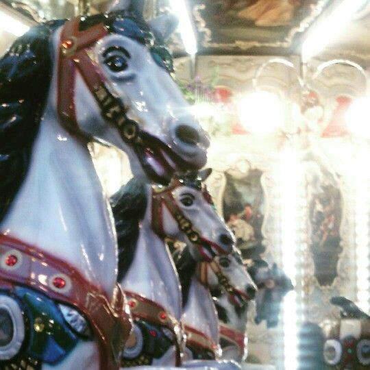 #giostra #vigevano #cavalli