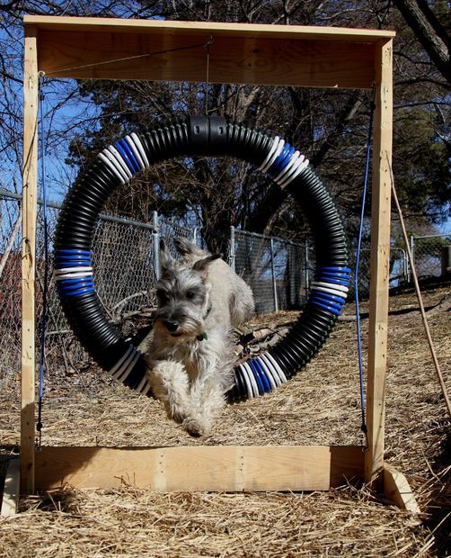 Rugby Dog Agility Show: 80 Best Images About Dogs: Fun Stuff On Pinterest