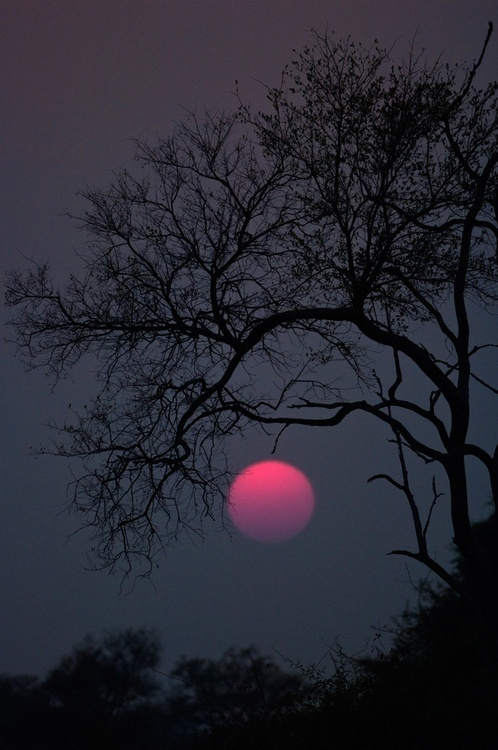 Pink Moon....