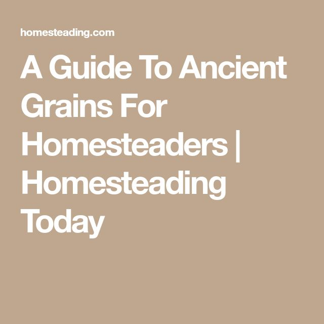 A Guide To Ancient Grains For Homesteaders | Homesteading Today