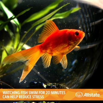 15 best ideas about apartment living on pinterest do for Easiest fish to take care of