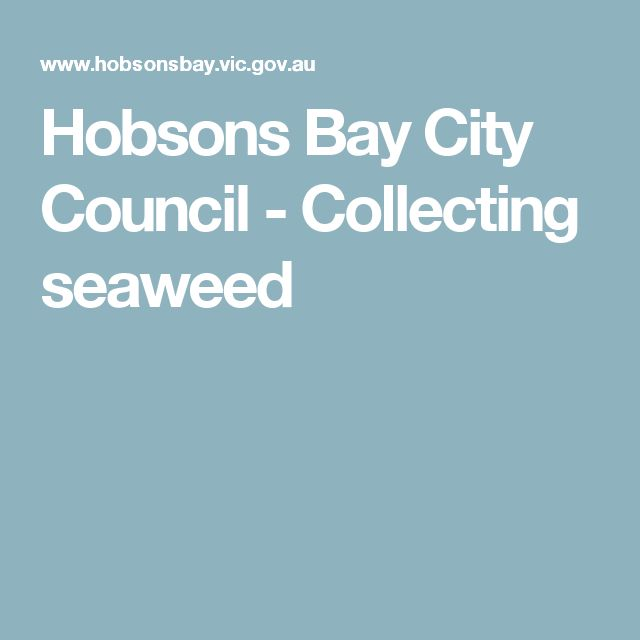 Hobsons Bay City Council -         Collecting seaweed