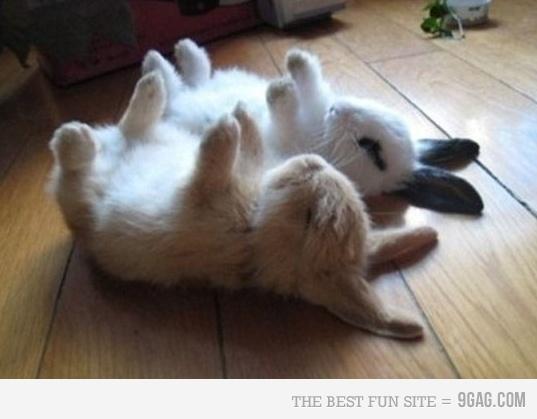 ooooo baby bunnies!