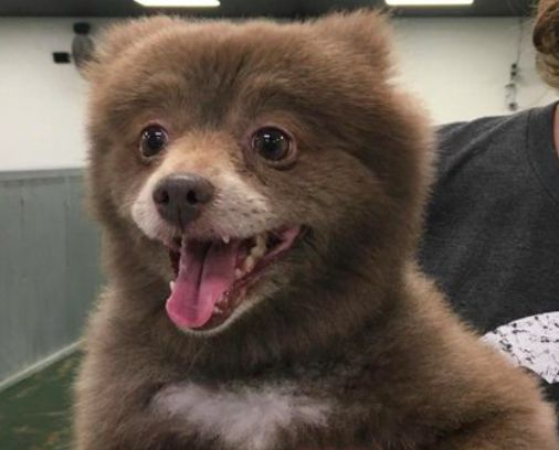 This beaming fluffy animal has delighted and confused the internet in equal measures - as no one seems to know exactly what it is.