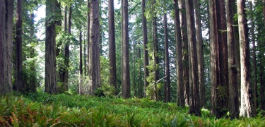 Redwood National Forest - We stayed at Prairie Creek Campground.  Great hiking.  We tried biking but rather unsuccessfully :)