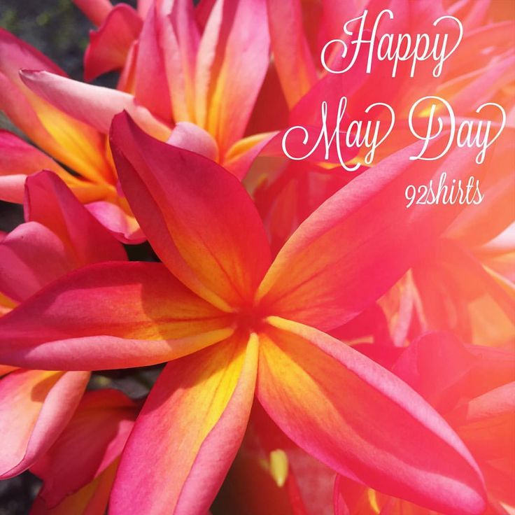 Lyric may day is lei day in hawaii lyrics : 54 best Be Here Now images on Pinterest | Comment, Instagram and ...