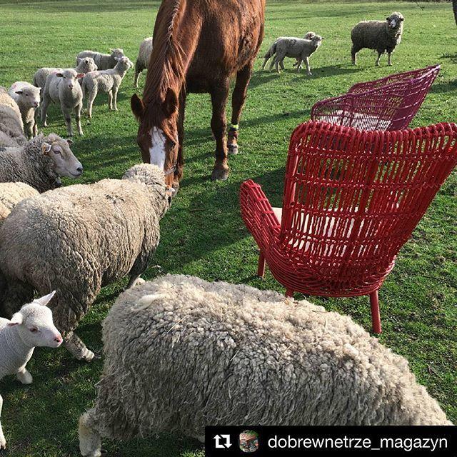 @dobrewnetrze_magazyn 💜💗 loving it! #noonu #mebleogrodowe #malinowy #garden #ogród #lato #owce #konie #wypasionemeble