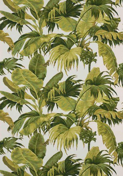 bananier boussac les jardin res urbaines pinterest motifs jungles et exotique. Black Bedroom Furniture Sets. Home Design Ideas