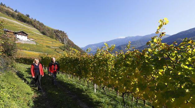 Vakantie op de boerderij in Zuid-Tirol - Appartementen - Roter Hahn