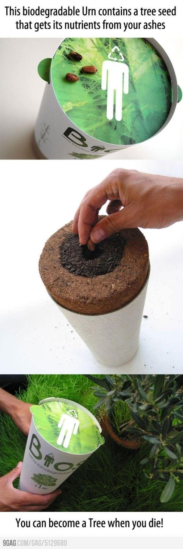 Biodegradable urnsBiodegradable Urns, Stuff, Awesome, Random, Trees, Cool Ideas, Interesting, Things, The