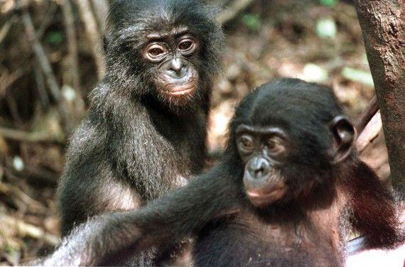 Top 10 bezaubernde Tiere, von denen Sie nicht wussten, dass sie bösartige Kanni… – Adorable Animals