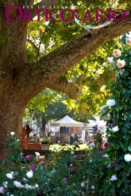 #Orticolario 2012 - Emozioni visive: platano monumentale attorniato da arbusti di rose nel parco di Villa Erba sul lago di Como