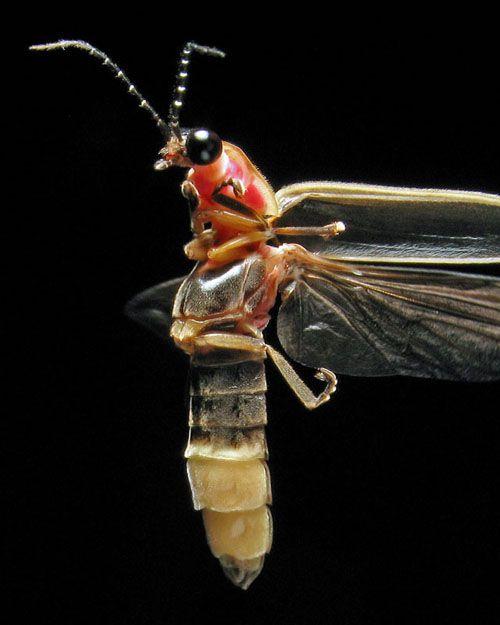 Fantastični insekti - Page 8 288b61602aaf84d7f10f0f18896f8897