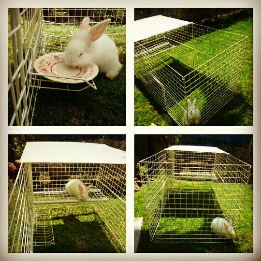 Diy rabbit cage using wire rack from daiso pvc pipe wire for Pvc rabbit cage