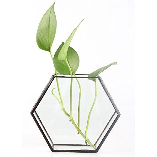 Hanging Wall Mount Hexagon Prism Glass Geometric Terrariu... https://www.amazon.co.uk/dp/B01ERGK43K/ref=cm_sw_r_pi_dp_x_YamDybX9FBP02