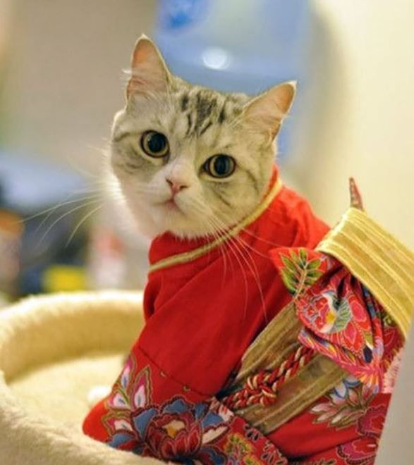 cats in kimonos are a thing
