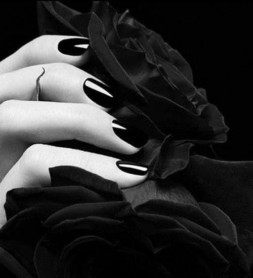 288c377b25950a69471e0b98065497d3--black-roses-red-roses