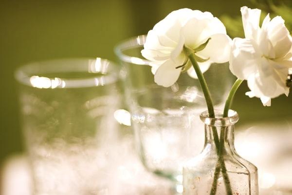 Ranunculus in medicine vials