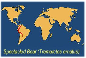 ABOUT THE BEARS: Bears of the World