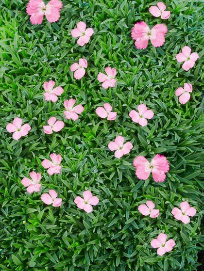 1110 Best Images About Garden Ideas On Pinterest