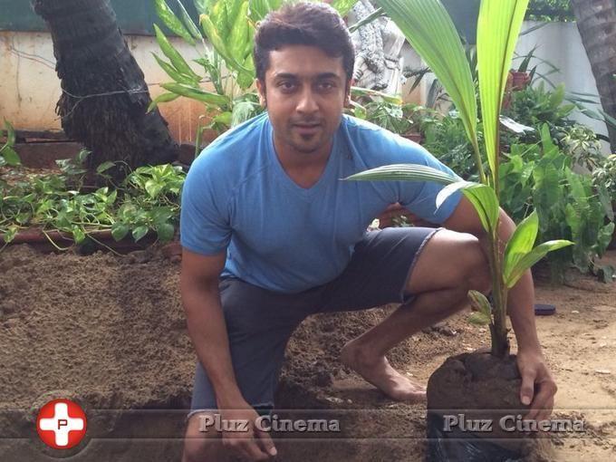 Picture 826301   Suriya - Suriyas My Tree Challenge to Aamir Khan Mahesh Babu and Sudeep Photos Tamil Pluz Cinema